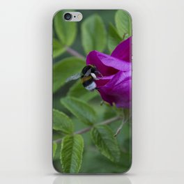Bumble Bee On Wild Rose iPhone Skin