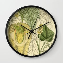 Sechium edule, Cucurbitaceae Wall Clock