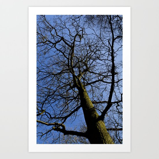 Wild Wood Tree Art Print