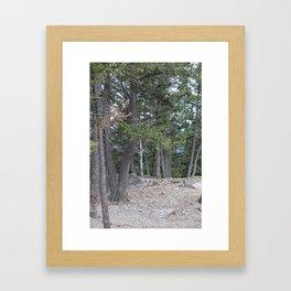 Rugged Beauty 3 Framed Art Print