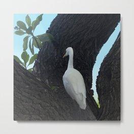 White Egret Bird, Ebony Tree, Turquoise Sky Metal Print