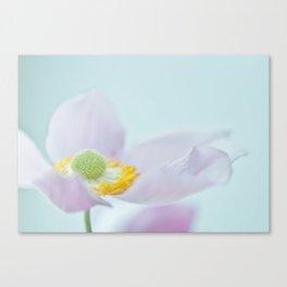 Wind Anemone Canvas Print
