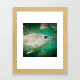 One Eye, One Tail Framed Art Print