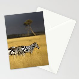 Zebra in Afternoon Light Stationery Cards