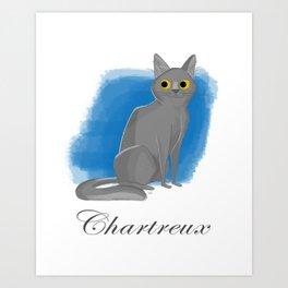 Chartreux Art Print