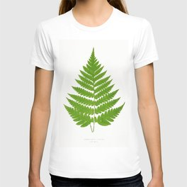 Edward Joseph Lowe - Acrostichum Alienum from Ferns T-shirt