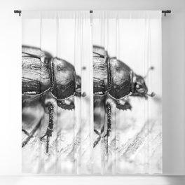 Black Beetle Blackout Curtain