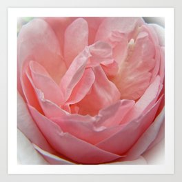Peace Rose Dream Art Print