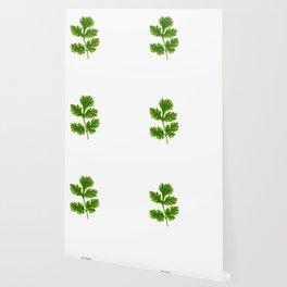 Cilantro Or Coriander   Funny Herb Wallpaper