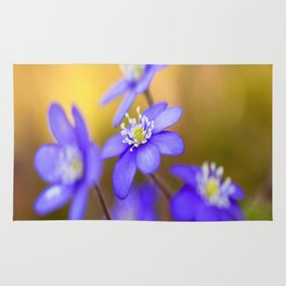 Spring Wildflowers, Beautiful Hepatica in the forest on a sunny and colorful background Rug