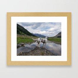 Wilderness Canyon Dalmatian Framed Art Print