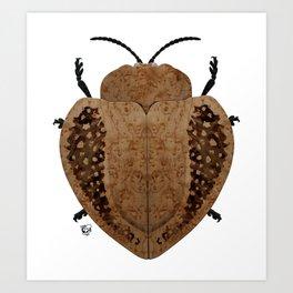 Exotic Wood Tortoise Beetle Art Print