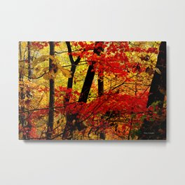 Red and Yellow Fall Trees Amicalola Falls State Park Photo Metal Print