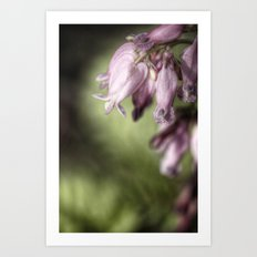 bleeding heart. Art Print