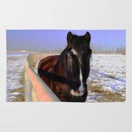 Mahogany Bay Draft Horse Rug