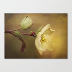Ladybird on flower Canvas Print