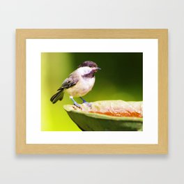 Bathtime for Birdie Framed Art Print