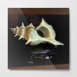 Shellfed Metal Print