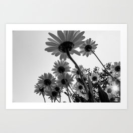 Below The Daisies Art Print