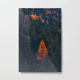 Autumnal forest trees #4 Metal Print