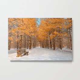 Gold Winter Pine Forest Trail Metal Print