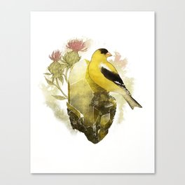 Goldfinch Bird and Anglesite Crystals Canvas Print