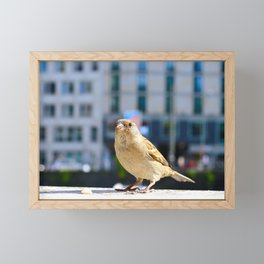 City Bird Lovely Sparrow Framed Mini Art Print
