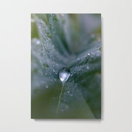 Leaf hugging a dew drop Metal Print