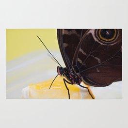 Macro shot of morpho butterfly sitting on orange and eating Rug