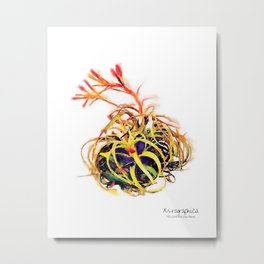 Tillandsia Xerographica Air Plant Watercolor Metal Print