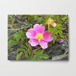 Wild Rose Metal Print