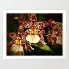 Orchids IV Art Print