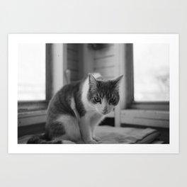 Solemn Kitty  Art Print