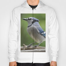 A Northern Blue Jay Hoody