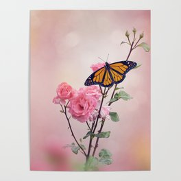 Monarch Butterfly on Rose flowers Poster