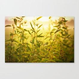 meadow herbs Canvas Print