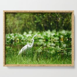Great Egret in a Green Field Serving Tray