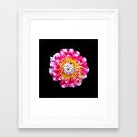 dahlia Framed Art Prints featuring Dahlia by Trevor Jolley