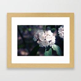 Mountain Laurel Framed Art Print