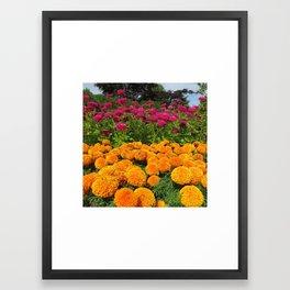 Pink and Orange Zinnias Framed Art Print