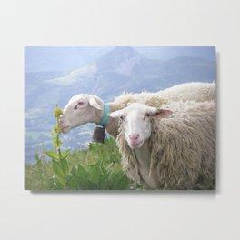 Moutons en auvergne FRANCE Cantal Metal Print