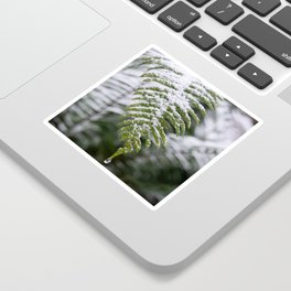 Fern Forest Winter Pacific Northwest Snow II - Nature Photography Sticker