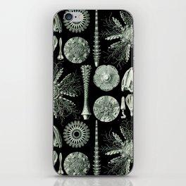 Ernst Haeckel - Scientific Illustration - Echinidea (Sea Urchins) iPhone Skin