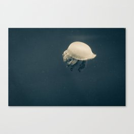 Jelly No. 1  Canvas Print
