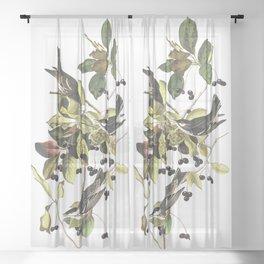 Black poll warbler, Birds of America, Audubon Plate 133 Sheer Curtain