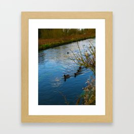 Duck family day out in The Cotswold's Framed Art Print