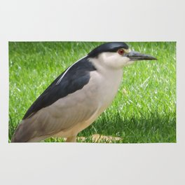 Black Crowned Night Heron in the Park Rug