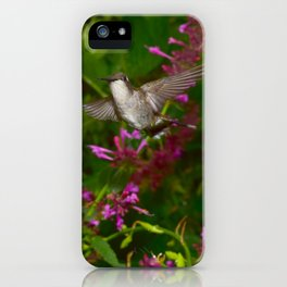 Hummingbird and pink agastache flower 44 iPhone Case