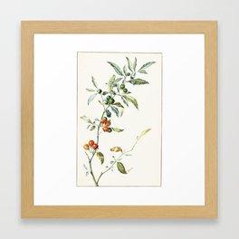 Jan Jansz. van de Vinne,  STUDY OF THE BRANCH OF A COFFEE PLANT Framed Art Print