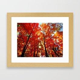 Sun in the Trees Framed Art Print